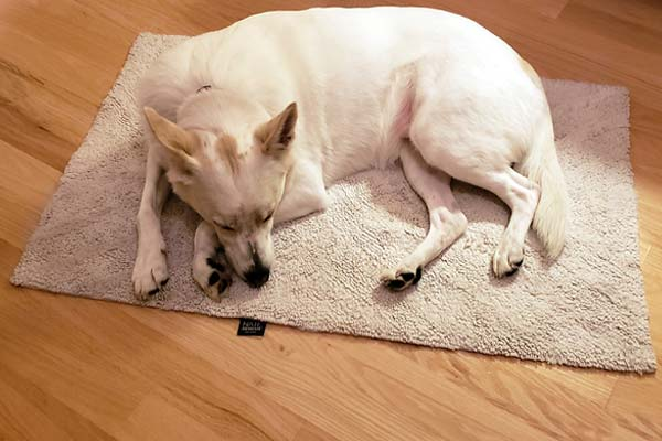 Best Area Rugs For Dogs How To