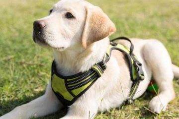 Best Dog Collars And Leashes For Large Breeds