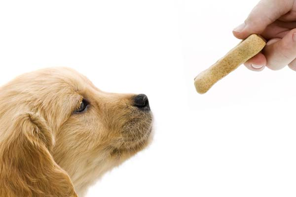 Best Treats For Puppies
