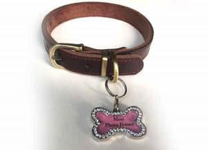 WintMing Dog Leather Training Collar with Name Tag