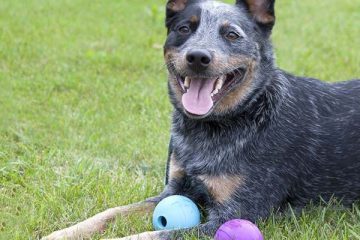 Best Dog Toys For Large Breeds