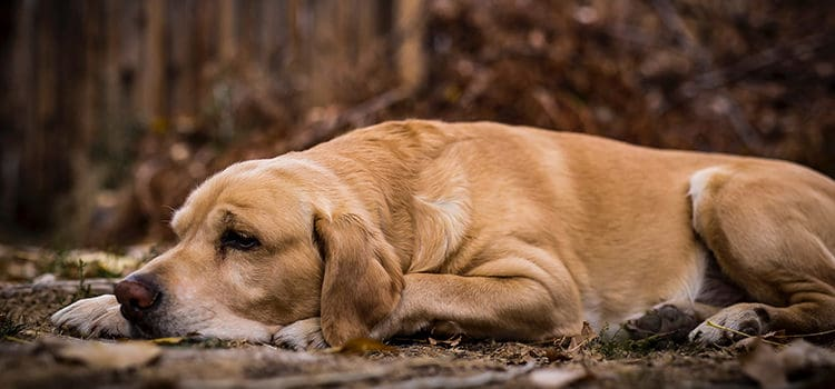 top 8 best dog beds for lab